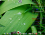 linux:gentoo:2010-04-06-230900_1279x1023_scrot_30_.png